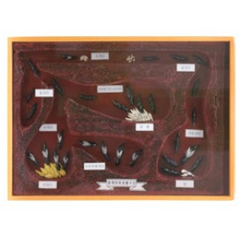 왕개미의생활과구조표본