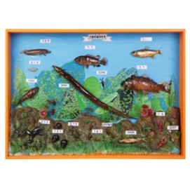 민물동물생태계표본