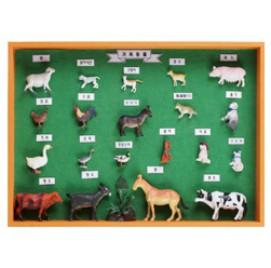 가축동물표본